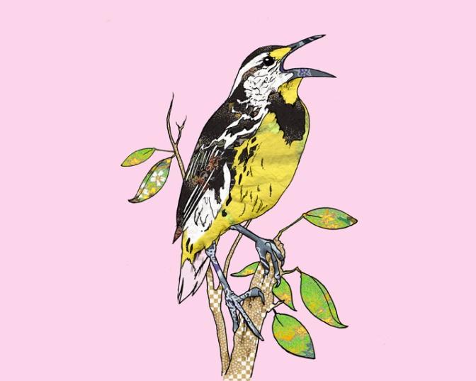 Eastern Meadowlark web