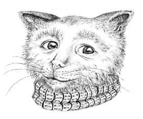 Catboy: Pamela Kirton