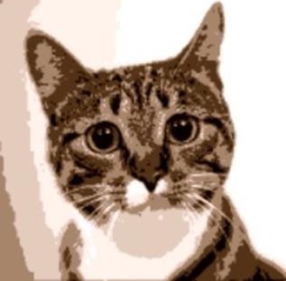 Entrancing Cat: Peter Elvidge
